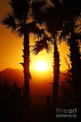 Photograph - Sunset Palms by Long Love Photography