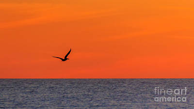 Photograph - Sunset Pelican by Silken Photography