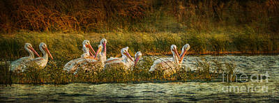Photograph - Pelicans Rest by Pam Vick