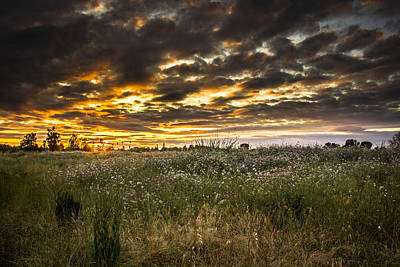 Flowers Photograph - Sunset by Philip Tolok