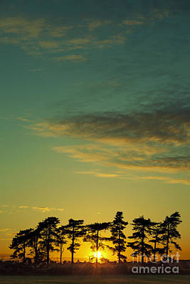 Sunset Pines Art Print by Paul Grand