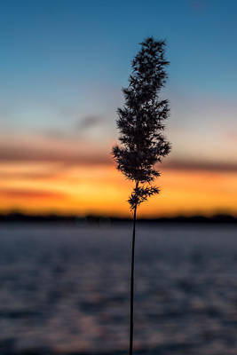 Sunset Reed Windward Beach Park Print by Terry DeLuco