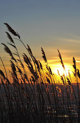 Photograph - Sunset Reeds Ibsp New Jersey by Terry DeLuco