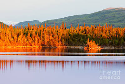 Nautical Animals - Sunset reflections on boreal forest lake in Yukon by Stephan Pietzko