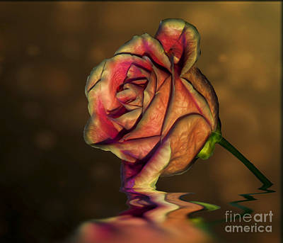 Photograph - Sunset Rose by Shirley Mangini