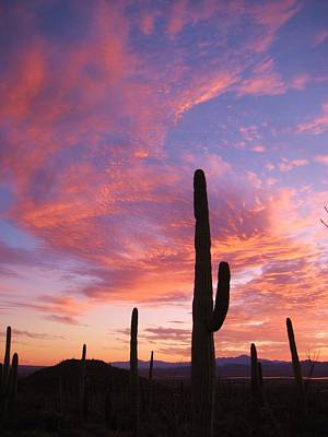 Sunset Saguaro Art Print