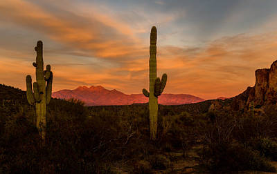 Photograph - Sunset Sentinels by Mary Jo Allen