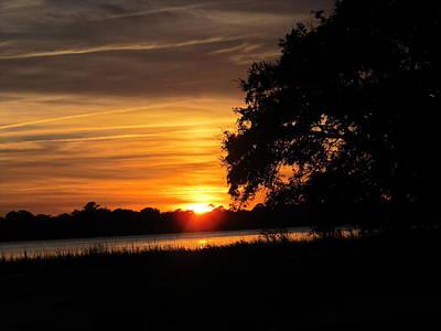 Art Print featuring the photograph Sunset Shadowed Oak by Joetta Beauford