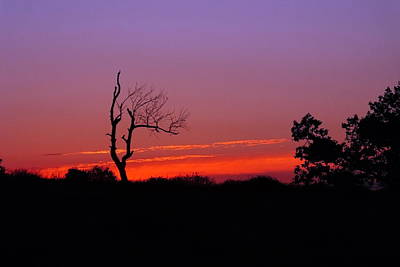 Sunset Silhouette 2 Art Print by Francie Davis