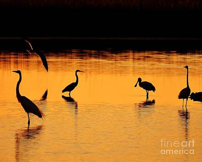 Sunset Silhouette Art Print by Al Powell Photography USA