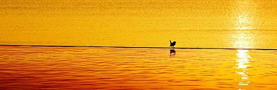 Animals Photos - Sunset Silhouette by Darryl Dalton
