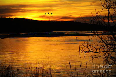 Photograph - Sunset Silhouette by Elizabeth Winter