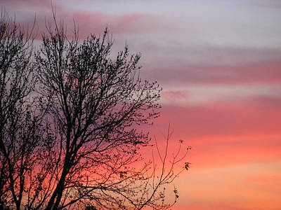 Photograph - Sunset Silhouette by Ellen Meakin