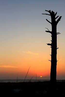 Sunset Silhouette Art Print by Saya Studios