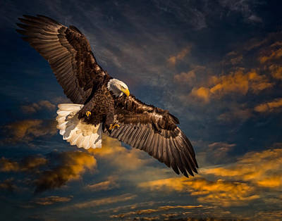 Photograph - Sunset Soaring by Mark Steven Perry