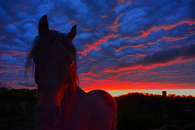 Photograph - Sunset Stallion by Emily Stauring