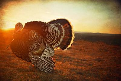 Turkey Photograph - Sunset Strut by Emily Stauring