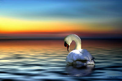 Bowing Photograph - Sunset Swan by Stephanie Laird