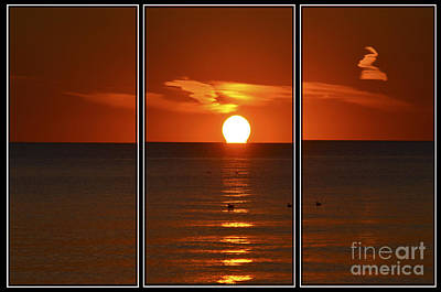 Tryptych Photograph - Sunset Swim by Cathy L Adams
