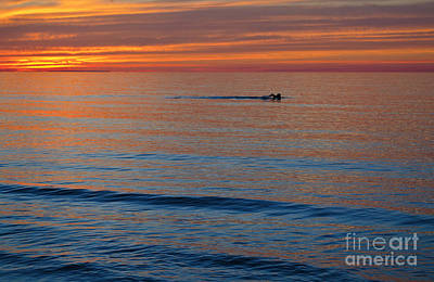 Art Print featuring the photograph Sunset Swimmer by Maria Janicki