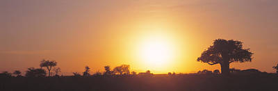 Sunset, Tarangire, Tanzania, Africa Art Print by Panoramic Images
