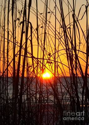 Photograph - Sunset Through Grasses by Barbie Corbett-Newmin