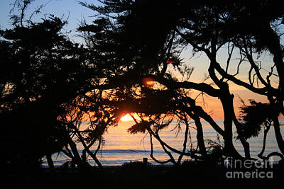 Sunset Through The Cypress Trees Cambria Art Print