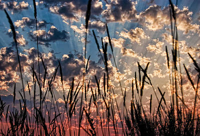 Art Print featuring the photograph Sunset Through The Grasses by Don Schwartz