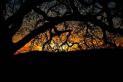 Ojai Wall Art - Photograph - Sunset Through The Oak by Liz Vernand