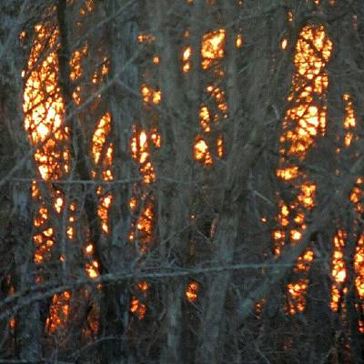 Sundown Wall Art - Photograph - Sunset Through The Tree Branches by Kelli Stowe