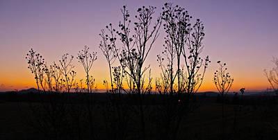 The Shins Photograph - Sunset Through The Trees by Jennifer Lamanca Kaufman