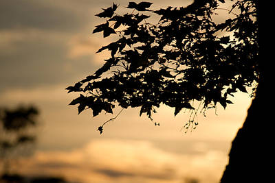 Art Print featuring the photograph Sunset Through The Trees by John Hoey