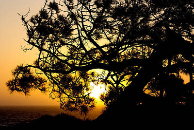 Digital Art - Sunset Through The Trees by Photographic Art by Russel Ray Photos