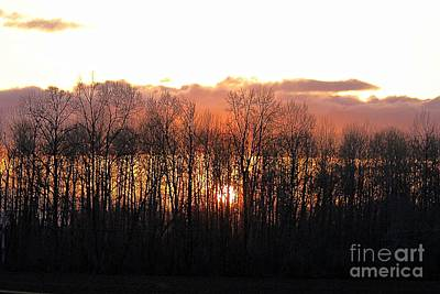 Photograph - Sunset Through Trees by Erica Hanel
