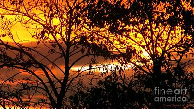 Photograph - Sunset Through Treetops by Leanne Seymour