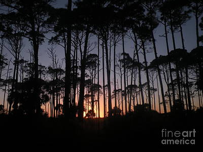 Photograph - Sunset Thru The Pines II by Lora Duguay