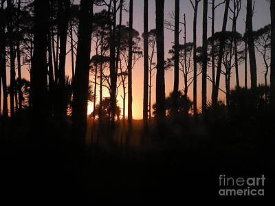 Photograph - Sunset Thru The Pines IIi Port St Joseph Peninsula by Lora Duguay