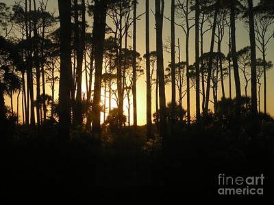 Photograph - Sunset Thru The Pines by Lora Duguay