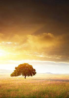 Sun Rays Photograph - Sunset Tree by Carlos Caetano