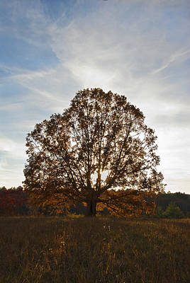 Photograph - Sunset Tree by Carol Erikson