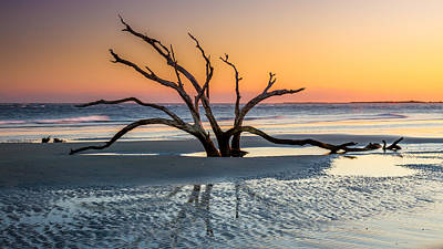 Beach Photograph - Sunset Tree In South Carolina by Pierre Leclerc Photography