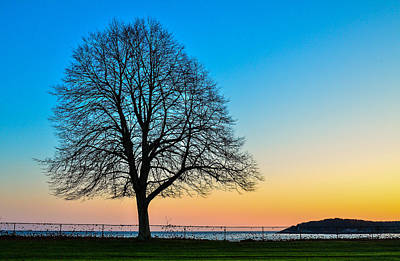 Photograph - Sunset Tree by Michael Hubley