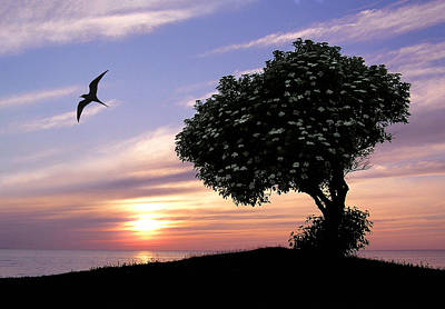 Photograph - Sunset Tree Of Tranquility by Dreamland Media