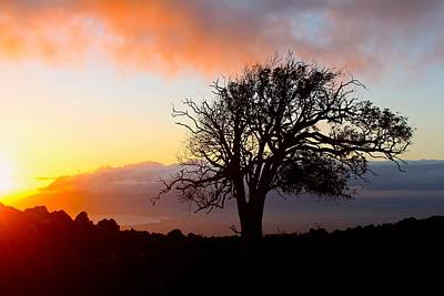 Sunset Tree In Maui Art Print by Venetia Featherstone-Witty
