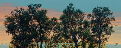 Photograph - Sunset Trees by Ben and Raisa Gertsberg