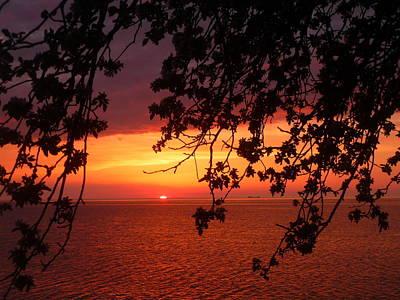 Beach Scenes Photograph - Sunset Under The Apple Tree by Heather Allen