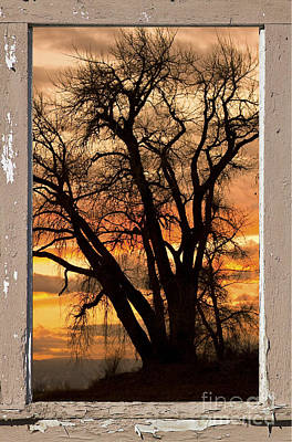 Tree Photograph - Sunset View From Peeling Window by James BO  Insogna