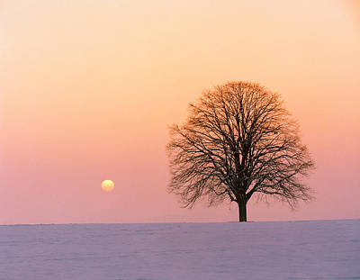 Bare Trees Photograph - Sunset View Of Single Bare Tree by Panoramic Images