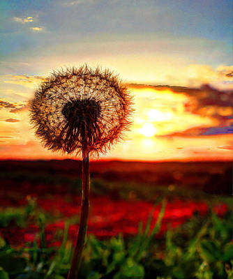 David Jones Photograph - Sunset Wishes by David  Jones