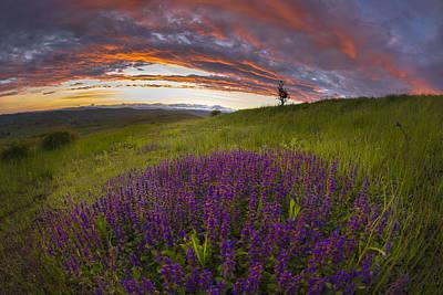 Sunset With Lavender Art Print by Ovidiu Caragea